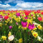 Frühlingsgewinnspiel: Mitmachen und gewinnen