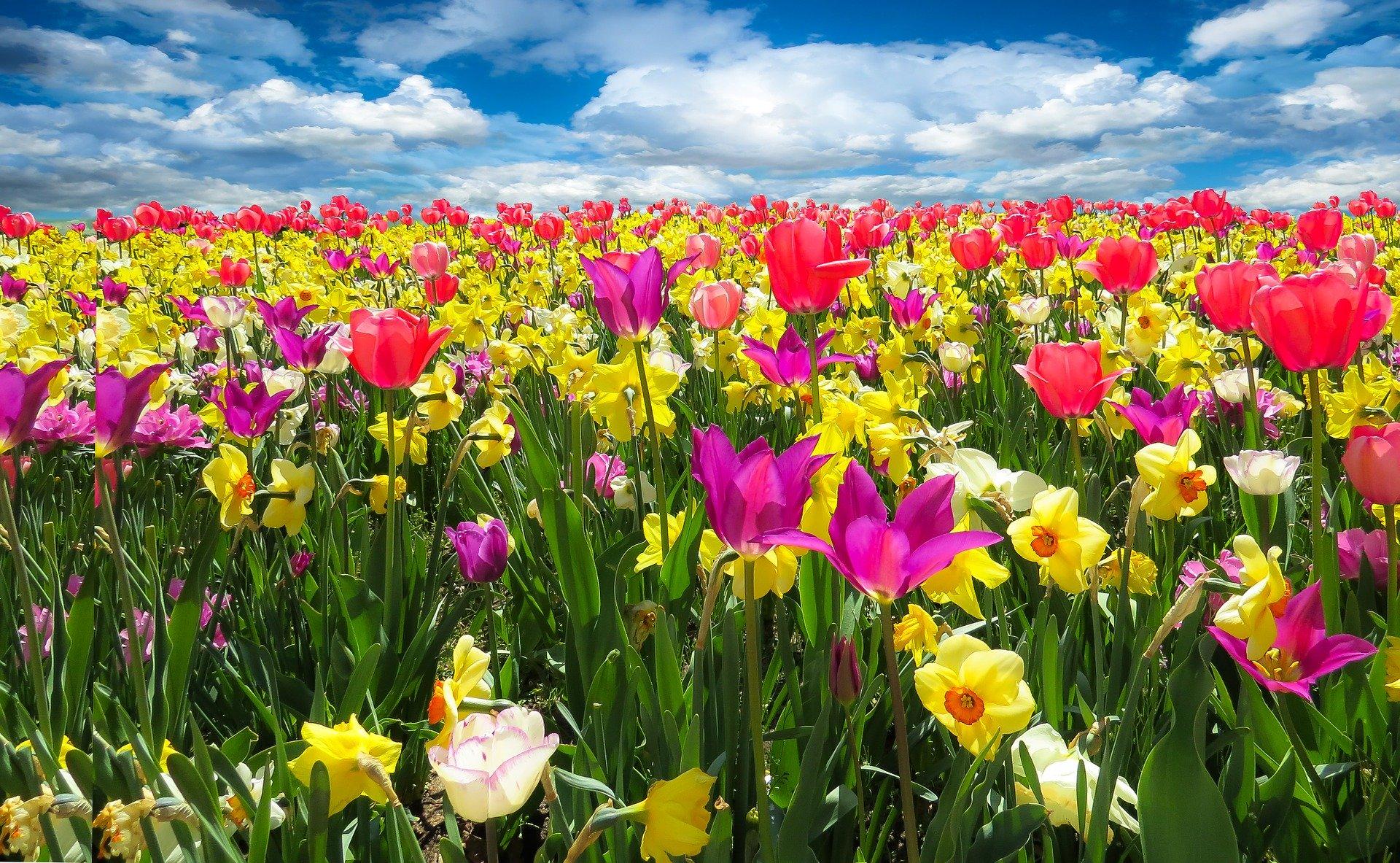 Frühling Bumen